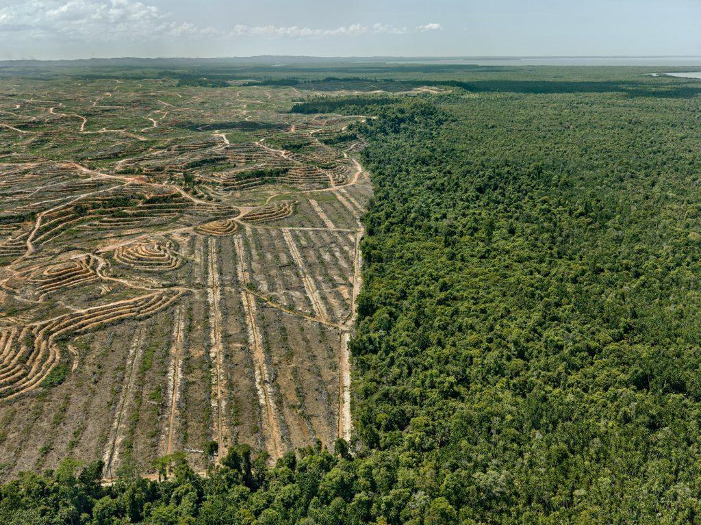 Palm Oil Plantation, Borneo, Malaysia.